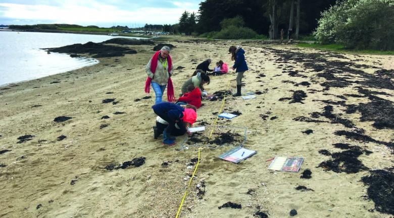 Élèves de l'île d'Arz étudiant la laisse de mer de leur aire marine éducative. © Fabrice Jaulin - PNRGM