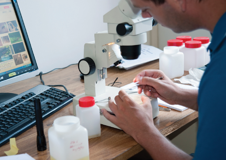 Détermination de larves prélevées pour évaluation de l'indice biologique. © Patrick Folliet - PN-Vanoise