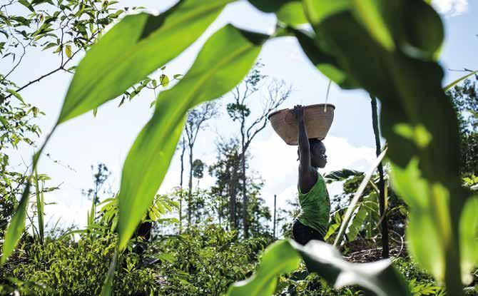 Abattis à Maripasoula (Parc amazonien de Guyane). © Karl Joseph