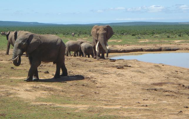 Parc national des Éléphants d'Addo en Afrique du sud.© Julien Calas