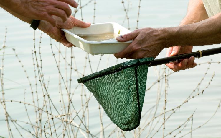 Suivi de la reproduction des brochets dans une frayère en Seine-et-Marne. © Laurent Mignaux - Terra
