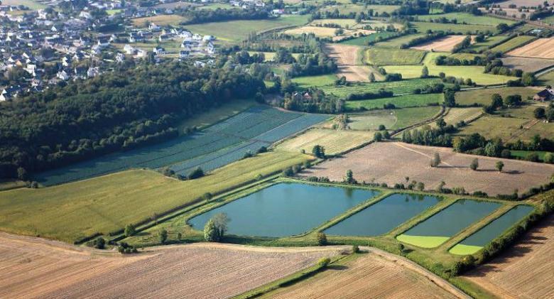 Marais de Châteauneuf (Ille-et-Vilaine)