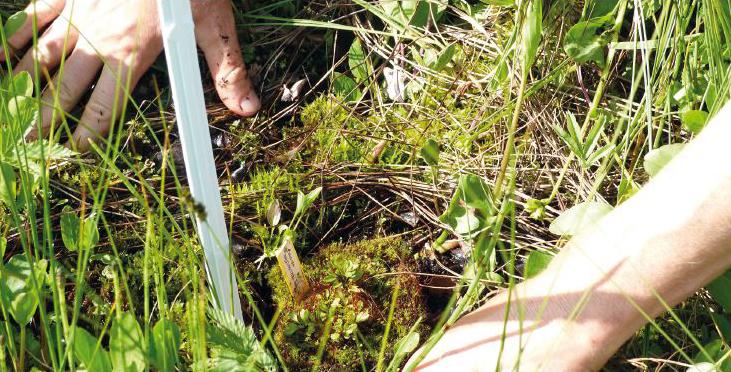 Production des plants de saxifrage par Cédric Bouvier du Jardin botanique de l'université de Franche-Comté et de la ville de Besançon©Julien Guyonneau - CBNFC-ORI