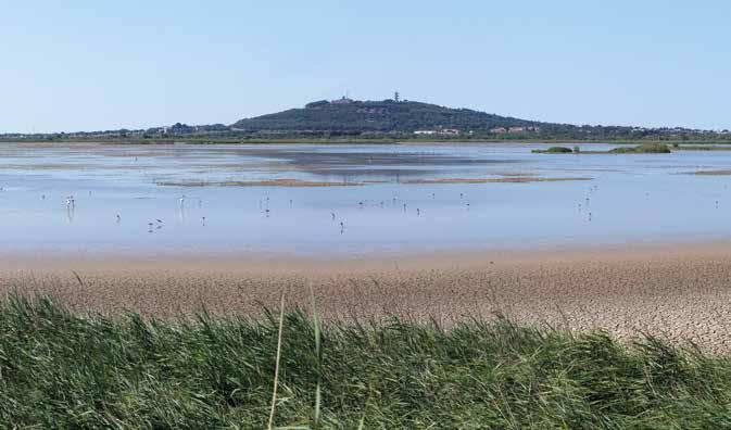 Les herbiers aquatiques constituent un compartiment de l'habitat à forte valeur patrimoniale de la réserve naturelle nationale du Bagnas.© Frédéric Hébraud - CAUE 34