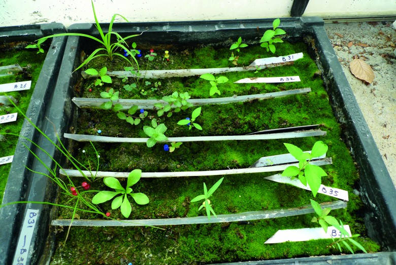 La banque de semences du sol correspond à la réserve de diaspores (fruits, graines, spores) viables présentes dans le sol d'un lieu donné.
