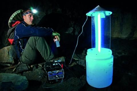 Recherche de lépidoptères en milieu souterrain par un chercheur italien, Fabio Mosconi