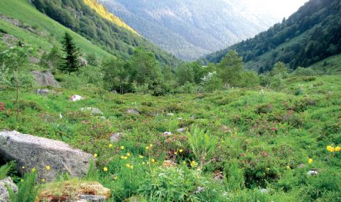 Ce site des Pyrénées centrales a fait l'objet de l'application d'un IPE en 2013. Les résultats ont constitué une base d'échanges entre le gestionnaire du site et plusieurs acteurs du territoire en vue d'assurer une gestion conservatoire de la biodiversité.