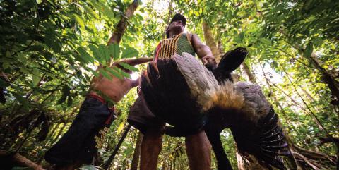 La chasse, une préoccupation quotidienne pour la subsistance de nombreux habitants du sud de la Guyane.