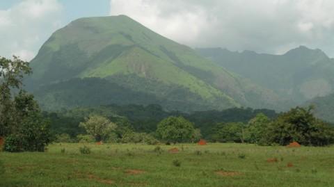 Réserve du mont Nimba à cheval entre la Guinée, le Libéria et la Côte d'Ivoire. © Guy Debonnet - UNESCO