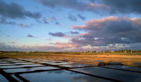 Les MAET sont importantes pour conserver une biodiversité étroitement liée aux pratiques salicoles.