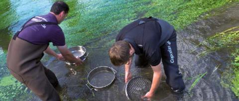 Impacts des pollutions diffuses Faune et flore aquatiques