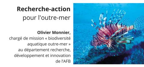 Le poisson-lion (Pterois), une menace pour les écosystèmes marins antillais.