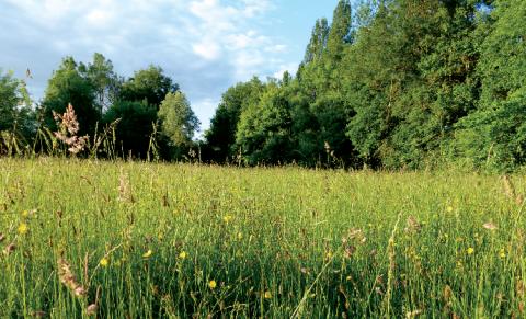 Flore de prairies naturelles inondables.