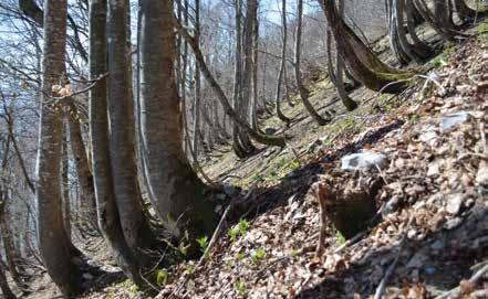 Le défi : conforter le stock de carbone en forêt et alimenter une économie bas-carbone. © PNRMB
