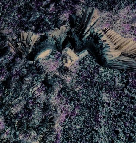 Gypaète barbu (Gypaetus barbatus mort empoisonné.  © LPO France