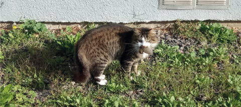 Chat chassant un oiseau - Crédit : Clothilde Kussener